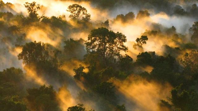 'Central and South America remains one of the most dangerous places to be an environmentalist.' The Amazon rainforest canopy at dawn in Brazil. Photograph: Peter van der Sleen/University of Leeds/PA
